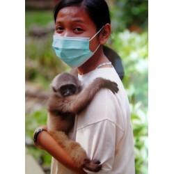 Cita gibbon