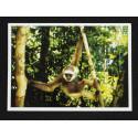 Postcard of free Gibbon